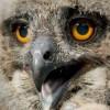 Uhufiókával gyarapodott a veszprémi állatkert