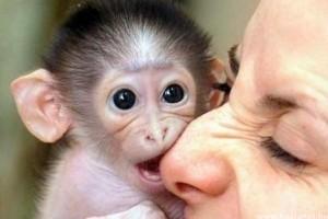 A háziállatként tartott majmok összeírását sürgetik