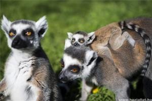 Katták születtek a Nyíregyházi Állatparkban