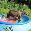 Állati hőség: így vészeld át!