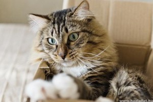 A macskának is van lelkiismerete...