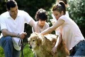Melyik a legjobb család- és gyerekbarát kutyafajták?