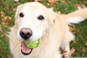 Játék a kutyával - Mit, mikor, hogyan?