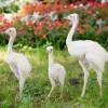 Három fehér nandufióka kelt ki a Nyíregyházi Állatparkban