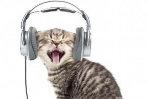 Zenei CD készül cicáknak