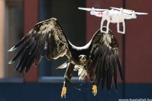 Sasokat vet be drónok ellen a holland rendőrség