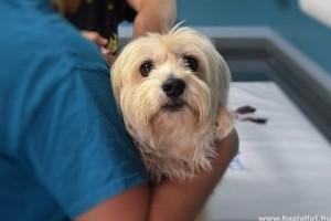 Az ajánlott védőoltások is fontosak kutyáink egészségmegőrzéséhez