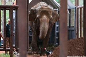 Megnyílt Latin-Amerika első elefántmenhelye