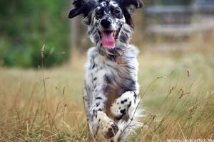 10 aktív kutya, csak fitteknek ajánljuk!