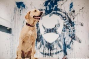 Állat munkahely: plusz egy hét szabadság kutyatulajoknak