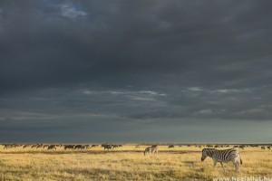 A természet törvényei képekben - így fotózd a vadvilágot!