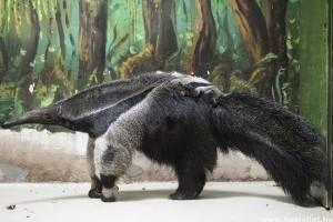 Májusi bababumm a hazai állatkertekben