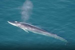 Két hatalmas bálna bukkant fel a horvát tengerparton