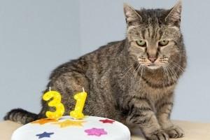 Elhunyt a világ legidősebb macskája