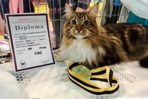 Dylan, a hétvégi macskakiállítás egyik nyertese