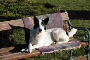 A kutya, akinek 3 hónapja 1% esélyt adtak
