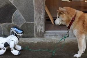 Az ember második legjobb barátja - a robot?