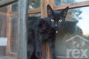 Február 17-én, a macskák világnapján újra nyit a Rex Alapítvány Jótékonysági Macskakávézója