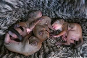 9 kismókus maradt fedél nélkül