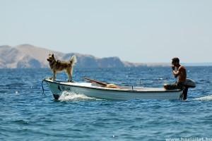 Utazás kisállatokkal: az Európai Unió világos szabályokkal rendelkezik