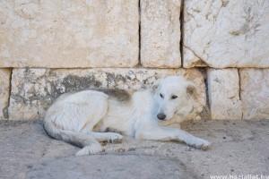A világ egyik legveszélyesebb halálos betegsége az állatokról átterjedő veszettség