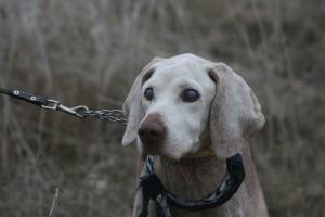Se lát, se hall: az öreg kutyák viselkedése megváltozik?