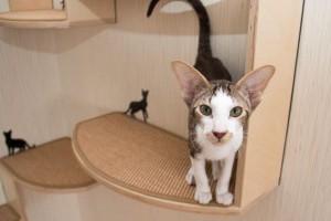 A legtutibb macskalétrák kint és bent