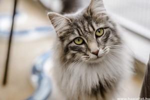 Macska-ember kapcsolat: amikor a tekintet beszél
