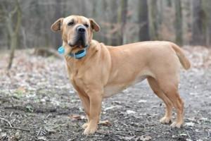 Elektromos nyakörv kutyáknak - Szakértői tanácsok, a megfelelő kiképző nyakörv kiválasztásához