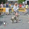 IV.  Ebathlon: Kutyamelegben is versenyeztek a kutyus-gazdi párosok