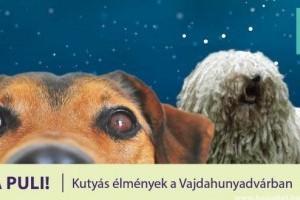 Induljon a Puli: kutyák a múzeumban a kutatók éjszakáján