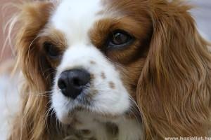 5 kutyafajta, amiből lelki támogató kutyát lehet nevelni