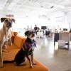 Házikedvencek az irodában: az állatbarát munkahelyek előnyei