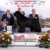 Egy magyar újfundlandi kutya lett Európa legszebbje