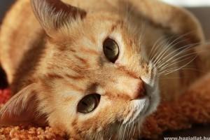 Hogyan őrizzük meg cicánk egészségét?