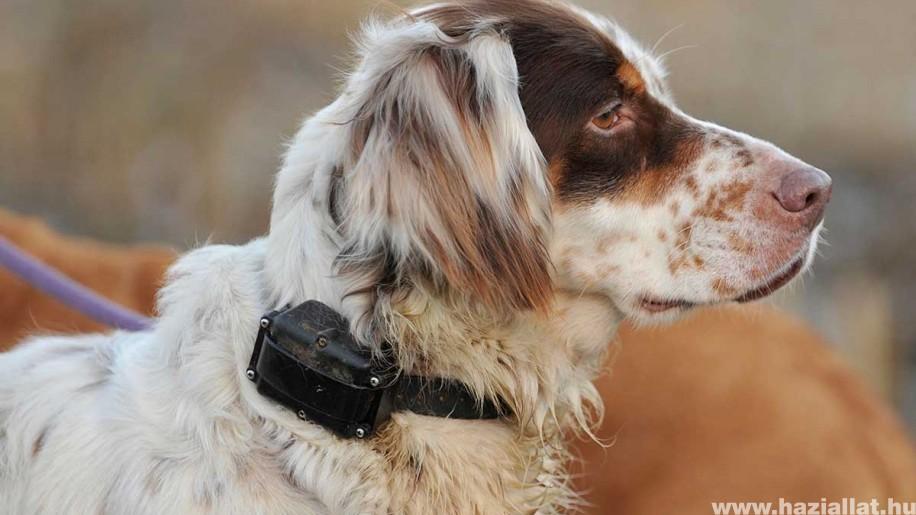 Elektromos nyakörvek kutyáknak