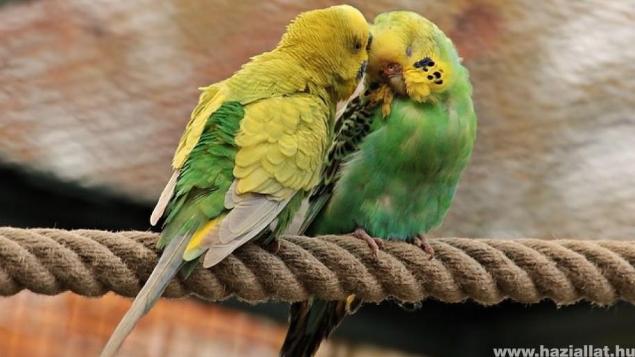 Mit tehetünk, ha unatkozik a papagáj?