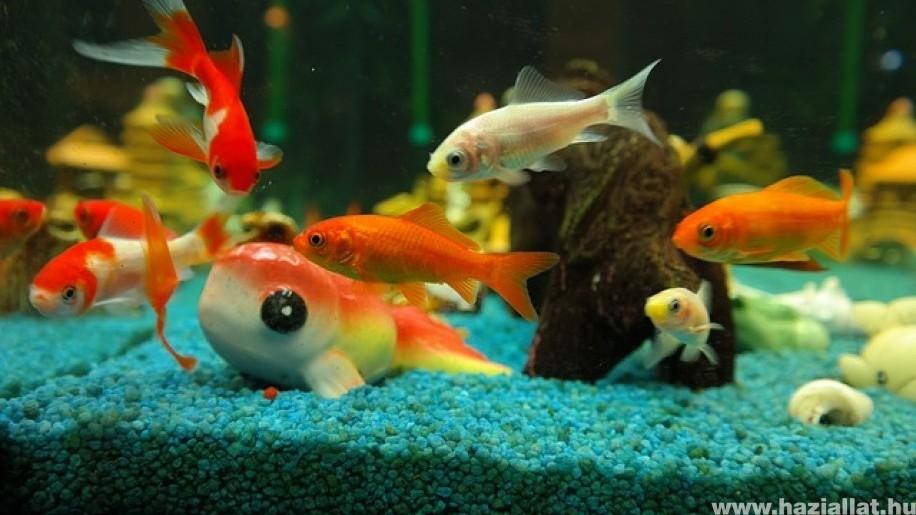 Időnként szükséges vizet cserélni az akváriumban