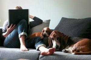 Kutyák elfoglalt embereknek