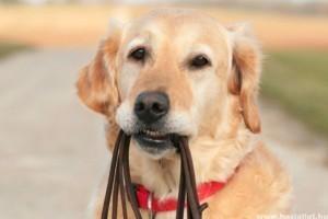 Kutya klikker edzése - tréningvideó