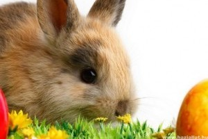 Tényleg a húsvéti nyuszi tojta a csokitojást?